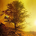 Sunrise Flare by Svetlana Sewell