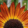 Sunrise Floral by Susan Herber