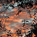 Sunrise Leaves by Jeff Galbraith