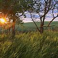 Sunrise On A Farm During The Summer by Dan Jurak