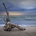 Sunrise On The Beach With Driftwood At Oscoda by Randall Nyhof