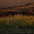 Sunrise On Wild Grasses II by Debbie Portwood