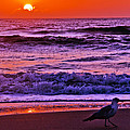 Sunrise Sea And Seagull by Roger Wedegis
