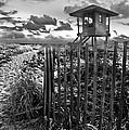 Sunrise Sentinel In Black And White by Debra and Dave Vanderlaan