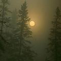 Sunrise Through The Fog 1 by Janice Adomeit