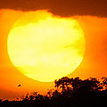 Sunset And Bird by Alistair Lyne