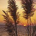 Sunset On The Mediterranean Sea And Plant by Patrick Kessler