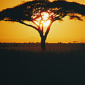 Sunset And Trees, Serengeti Plains by Skip Brown