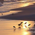Sunset Beach by Nava Thompson