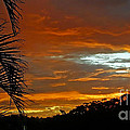 Sunset Behind The Palms by Kaye Menner