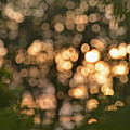Sunset Bokeh  by Debbie Portwood
