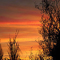 Sunset Branches by Heather Fitzgerald