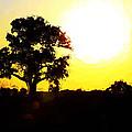 Sunset by Brenda Deem