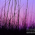 Sunset Grasses by Al Powell Photography USA