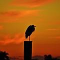 Sunset Heron by Lynda Dawson-Youngclaus