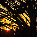 Sunset In The Trees by Garry Gay