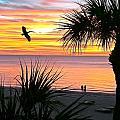 Sunset Majesty by Stephen Warren