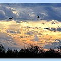 Sunset Of The Hawks by Maria Urso