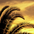 Sunset Palms by Carolyn Marshall