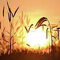 Sunset Rye IIi by JD Grimes