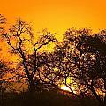 Sunset, Sabi Sand Reserve, Mpumalanga by Stuart Westmorland