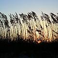 Sunset Sea Oats by Barbara Northrup