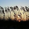 Sunset Sea Oats by Barbara Northrup