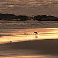 Sunset Shimmer Beach by Debra     Vatalaro