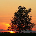 Square Photograph Of A Fiery Orange Sunset And Tree Silhouette by Angela Rath