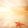 Sunset Star Fish by Lee-Anne Rafferty-Evans