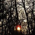 Sunset Through Trees by Shannon Bever