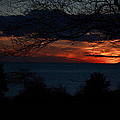 Sunset Tree Closeup by Alberto Filho