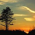 Sunset Tree by Jeff Galbraith