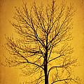 Sunset Tree Silhouette by Cheryl Davis