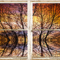 Sunset Tree Silhouette Colorful Abstract Picture Window View by James BO  Insogna