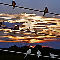 Sunsets And Birds by Susan Kinney