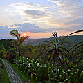 Sunsetting Over Costa Rica by Madeline Ellis