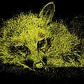 Sunshaded by Art Dingo