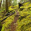 Sunshine Coast Trail by Danielle Silveira