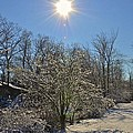Sunshine In The Snow by Nancy Rohrig