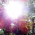 Sunshine by Kathleen Brown