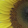 Sunshine by Ken Shuster