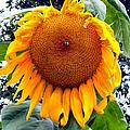 Sunshine by Art Dingo