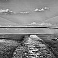 Sunshine Skyway Bridge by Gordon Engebretson