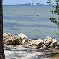 Sunshine Skyway From The Causeway by Carol Groenen