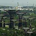 Supertrees At The Gardens By The Bay In Singapore by Ashish Agarwal