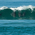 Surfing Dolphins 2 by Alistair Lyne
