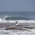 Surfs Up by Paul Robb