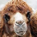 Surprised Camel by Scott Hovind