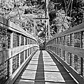 Suspension Bridge by Susan Leggett
